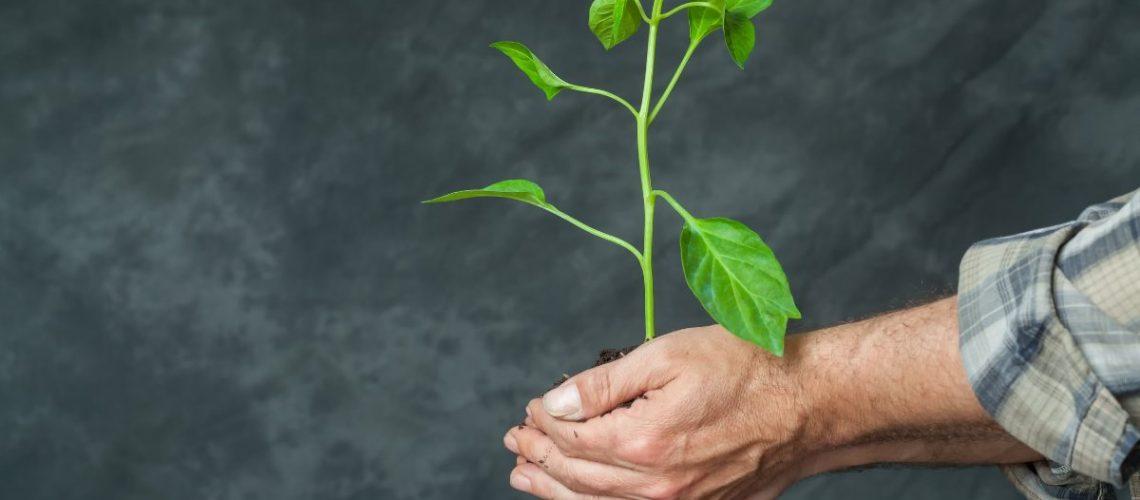 A man holding a plant sapling